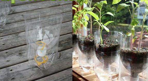 2-Liter Bottles Gardening