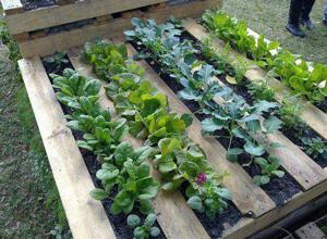 Pallet Grow Box