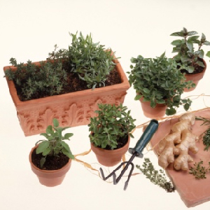 Gardening Hints And Tips