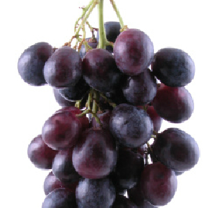 Grape Seed Extract May Combat Some Cancers