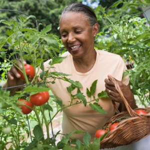 Growing A Backyard Organic Garden Is Good For Your Health