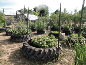 Container Gardening Planting In Tires